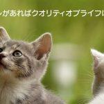 自動猫トイレがあればクオリティオブライフはウナギ登り